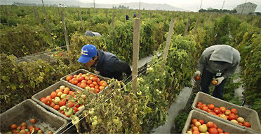 how to become a food health inspector in california