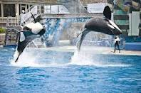 Court to decide if SeaWorld whales are illegal 'slaves'