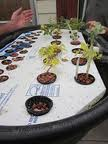 Idaho Aquaponics at Preparedness Fair