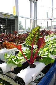 Op-Ed: Can you beat austerity with Aquaponics?