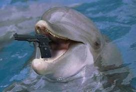 The Ukrainian Navy Is Strapping Dolphins With Guns To Attack Swimmers