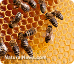 approved GMO insecticide responsible for killing off bees, contaminating entire food chain