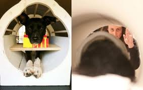 What is your dog thinking? Brain scans unleash canine secrets in Emory study