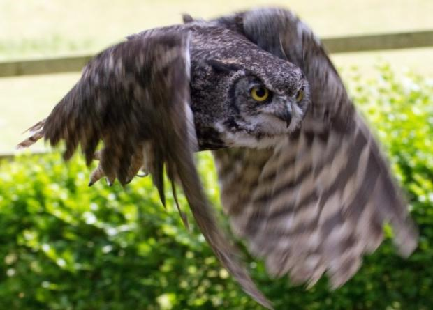 Super-Silent Owl Drone Will Spy on You Without You Ever Noticing