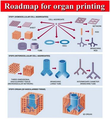 organ printing Another technology that we've used is actually that of printing this is actually a desktop inkjet printer, but instead of using ink, we're using cells  so we go layer by layer through the organ, analyzing each layer as we go through the organ, and we then are able to send that information, as you see here, through the computer and actually.