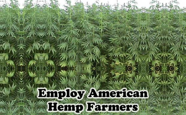 Colorado votes to Nullify Unconstitutional Hemp Farming Ban
