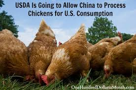 USDA to Allow China to Process Chickens, Ship Back to U.S