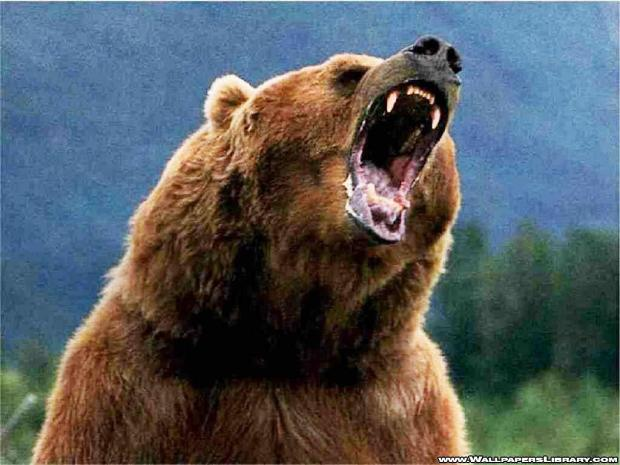 gallery for grizzly wallpaper