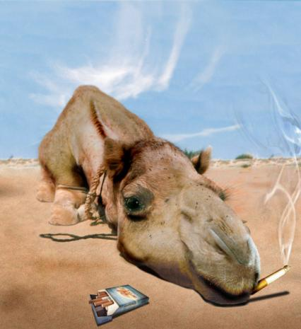 smoke camels A lie travels around the globe while the truth is putting on its shoes--mark twain (attributed) as we spend these anxious months prognosticating the industry-by-industry business impact of a .
