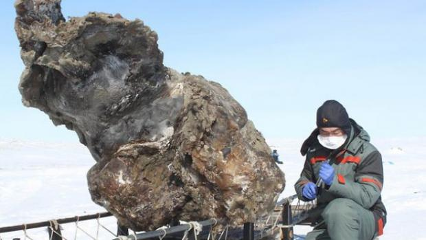 Wooly Mammoth Blood Recovered