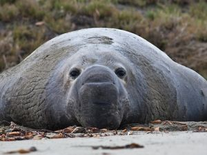 How Factory Farms Are Killing Seals