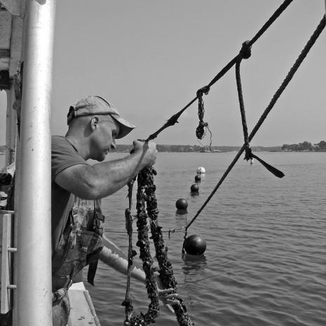 3-D Ocean Farming: Saving Our Seas