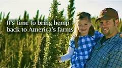 Hemp is legal to grow in nine states, but feds still threaten raids and prison time for farmers