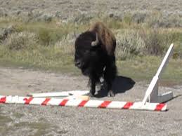 Wyoming Bison vs. Government Shutdown