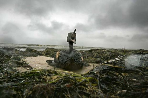 Gulf spill is potentially the greatest ever environmental disaster