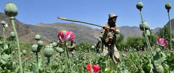 Afghanistan the World's Largest Opium Producer