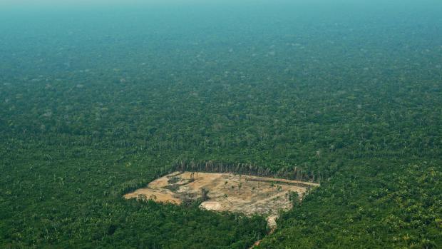 Brazil's Regime Destroying the Amazon's Rainforest for Profit