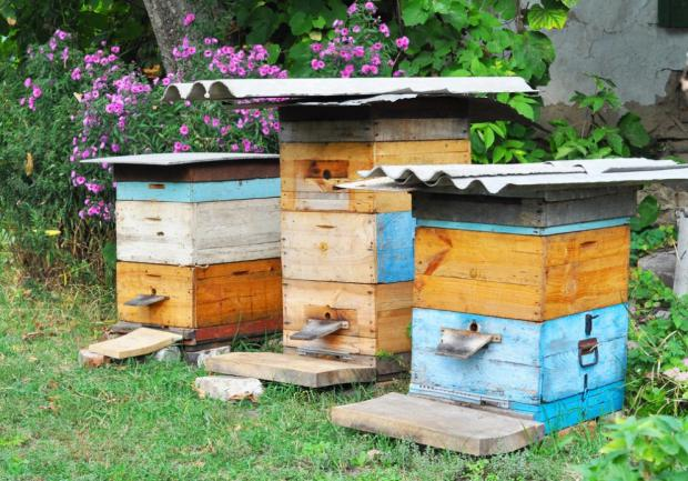 Lovely Backyard Beekeeping For Beginners U2013 The Complete Guide!