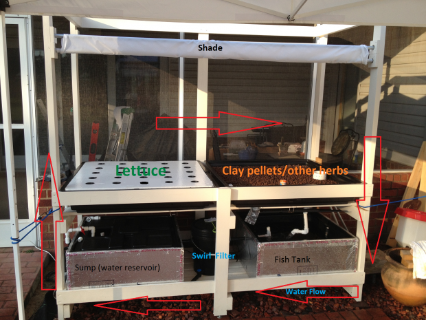 A breakdown of Tim's aquaponic system.