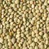 Lentils: The Super Food of the Prepper, by Brad H.