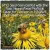 Millions of bees turning up dead around GMO corn fields soaked with neonicotinoid pesticides